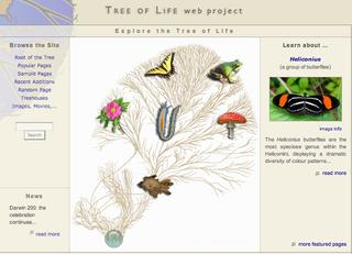 Blog_treeoflifeweb